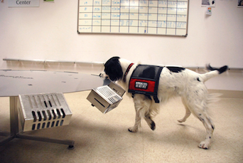 Dog Cancer Detection
