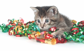 Cat Kitten Holiday Hazards