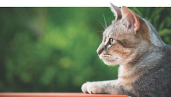 Cat Retrovirus Testing