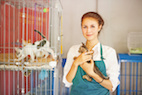 AAFP 2018: Managing Upper Respiratory Infections in Shelter Cats