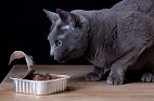 New Study Shows Surprising Food Preferences Among Cats, Dogs