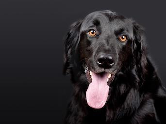 Dog Canine Epilepsy