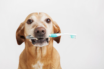 Dog Dental