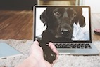 First Video-Based Canadian Veterinary Telehealth Company Launched