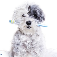 The Educated Client: Doggie Home Dental Care