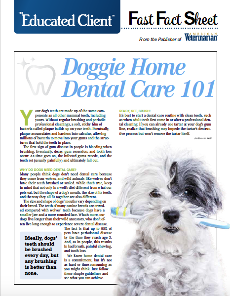 Dog Dental Care Handout