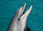 Dangerous Waters? Environmental Effects on Dolphin Immune and Endocrine Health