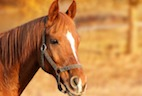 Equine Cushing Disease Around the World
