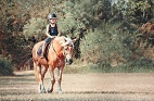 Safe Travels: Minimizing Transport-Related Behavioral Problems in Horses