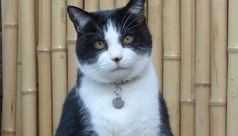 New Feline Hepadnavirus Identified