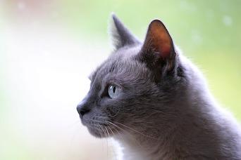 Feline Epilepsy