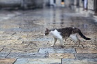 Genetic Analysis Reveals How Cats Conquered the Ancient World