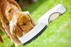 Interactive Canine Nutrition Resource Now Available