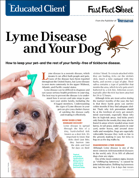 The Educated Client: Lyme Disease and Your Dog
