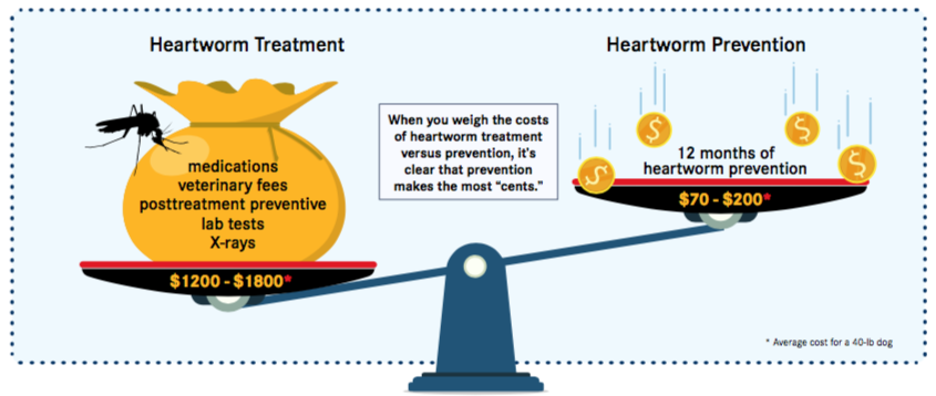 Heartworm Costs
