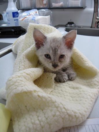 Kitten Hurricane