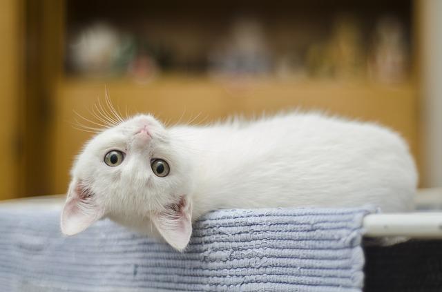 A Practical Guide to Feline Retrovirus Testing