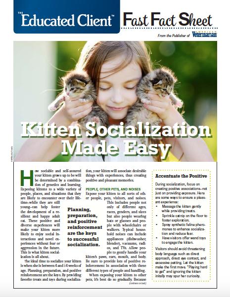 Kitten Socialization
