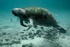 Endangered Marine Species Populations Bounce Back