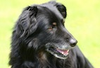You Can - and Should - Teach Old Dogs New Tricks