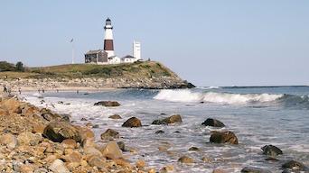Beach Seal Distemper