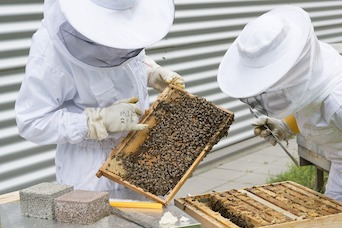 Preserving Our Ecosystem: Bees, Veterinarians, and the VFD