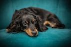 Canine UTI Diagnostics and Treatment in Denmark