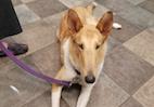 Canine Body Language Basics