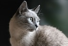 Feline Mesenchymal Stem Cells: What's Known and What's Possible