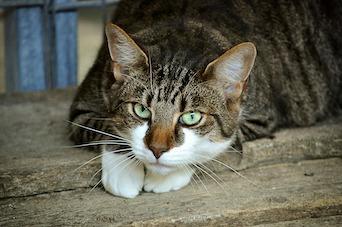 Testing Transdermal Phenobarbital in Cats