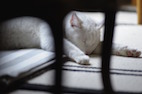 Animal Hoarding: A Unique Type of Mental Disorder?