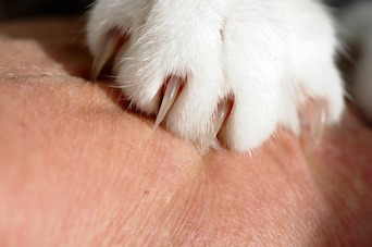 Declawing Cats: Adverse Medical and Behavioral Outcomes