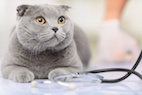 Veterinary Advice from Around the Web: Giving Subcutaneous (SC) Fluids to Cats