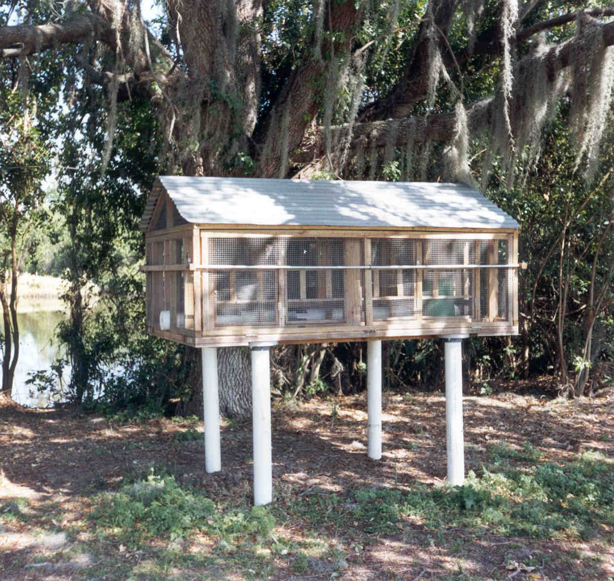Chicken Coop in Pinellas