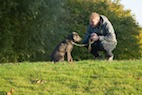 Is Bad Behavior in Dogs Linked to Owner Personality?