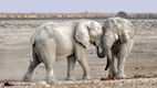 Might Elephants Be the Key to Curing Cancer?