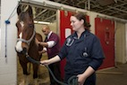 Frequency of Job-Related Injury in Equine Veterinarians