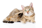 The Educated Client: Fleas and Your Pet