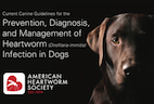 AHS Releases New Canine Heartworm Guidelines