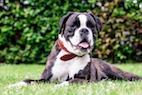 The 3-Tiered Approach of Treating Heatstroke in Dogs