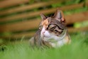 FDA Approves First Drug for Systemic Hypertension in Cats