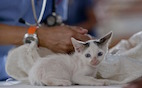 Purdue 2017: Early-Age Spay/Neuter Saves Lives