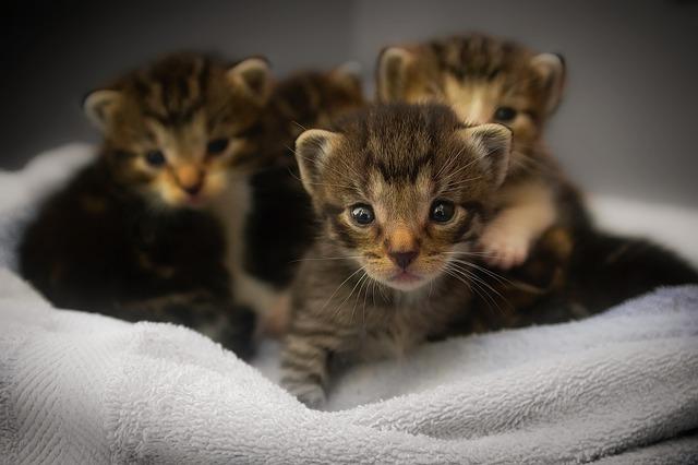 Kitten Retrovirus Testing