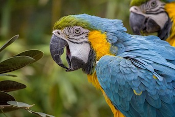 Effects of Environmental Enrichment on Macaw Behavior and