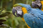 Effects of Environmental Enrichment on Macaw Behavior and Cortisol Levels