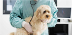 Computed Tomography and Canine Prostate Disease