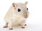 Effect of Lonely Mouse Syndrome in a Drug Safety Study