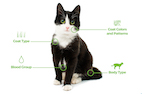 Expansive DNA Testing Now Available for Cats