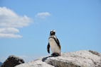 Researchers Identify Novel Avulaviruses in Antarctic Penguins