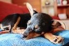 Should We Let Sleeping Dogs Lie (in the Bedroom)?